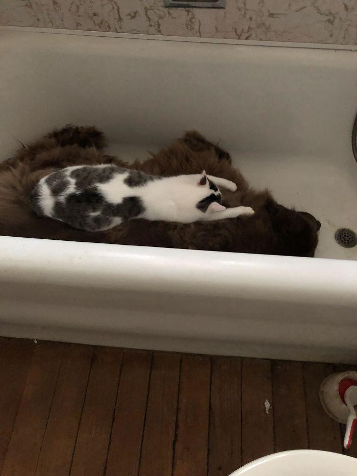 кот в ванной