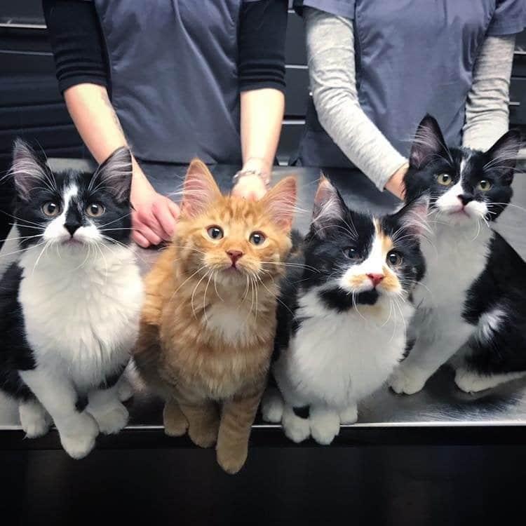четыре котенка рис 2