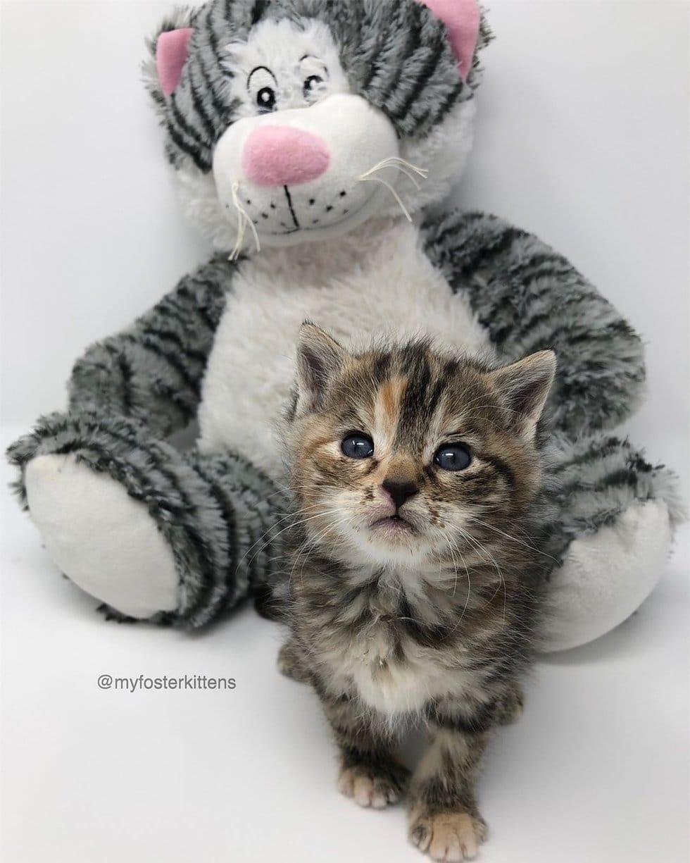 котенок с мягкой игрушкой