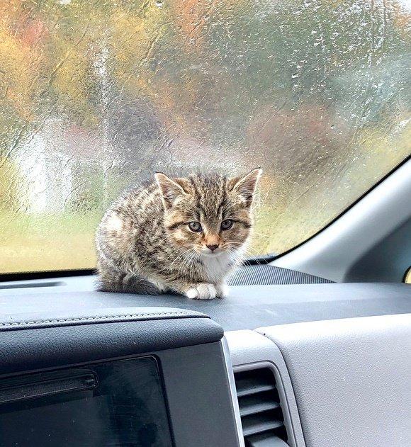 котенок в машине