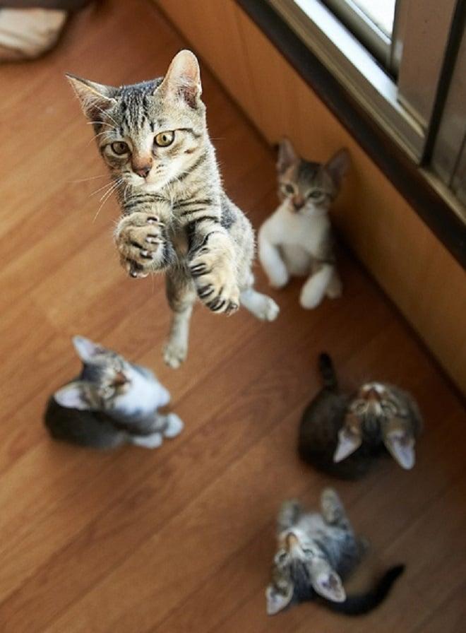 Котята на кухне