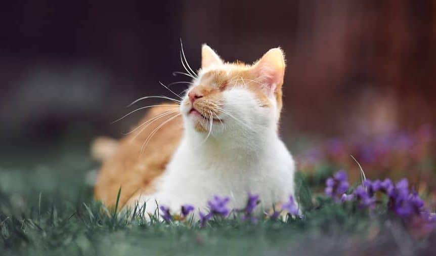 кот на улице рис 2