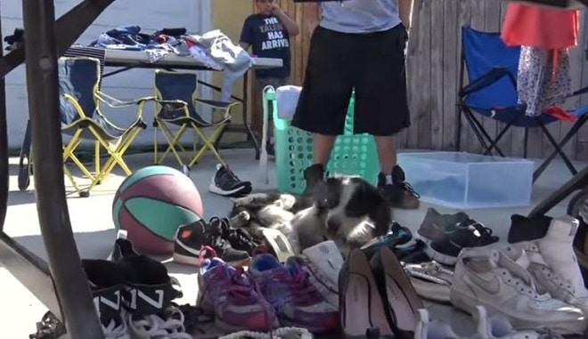 Собака в куче обуви
