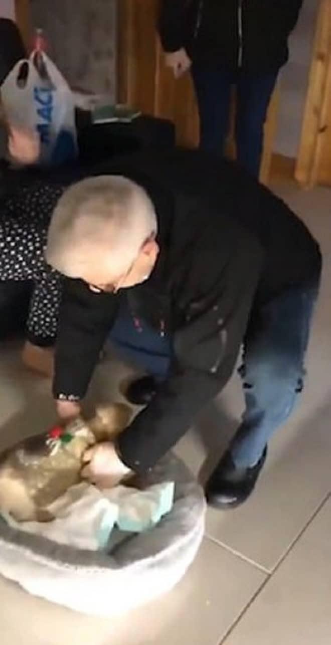 Дедушка берет щенка
