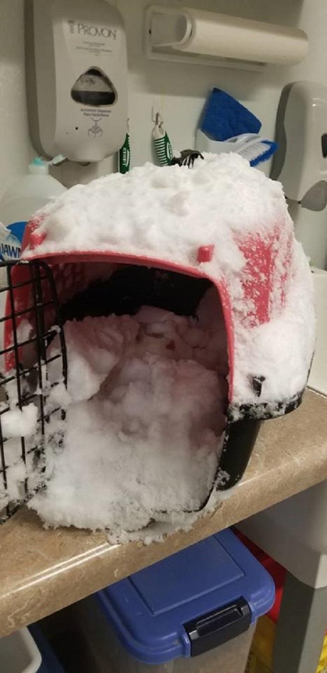 Пеноска и снег