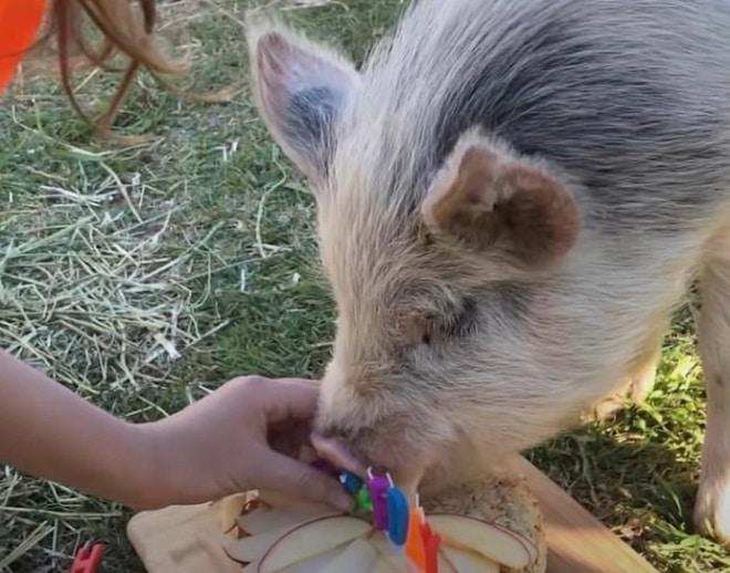 Свинка ест торт