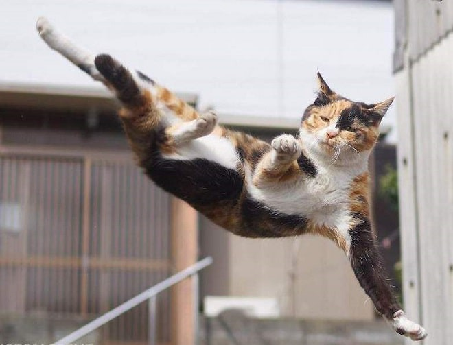 Кот в полете рис 2