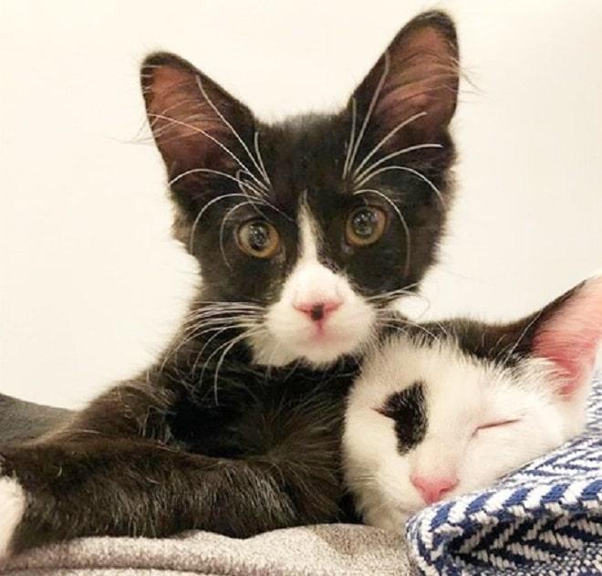 Два кота рис 2