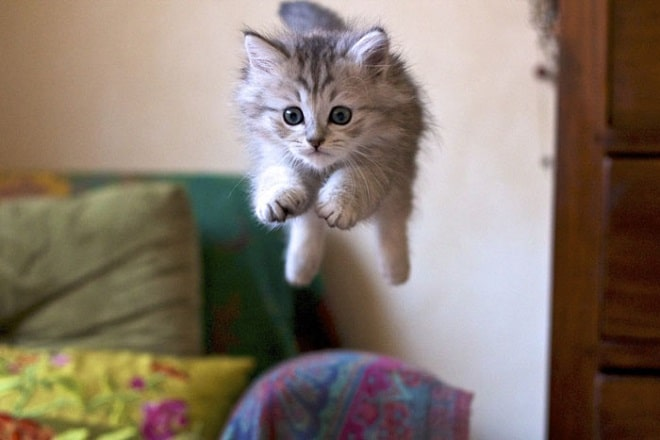 Котенок прыгает с кушетки