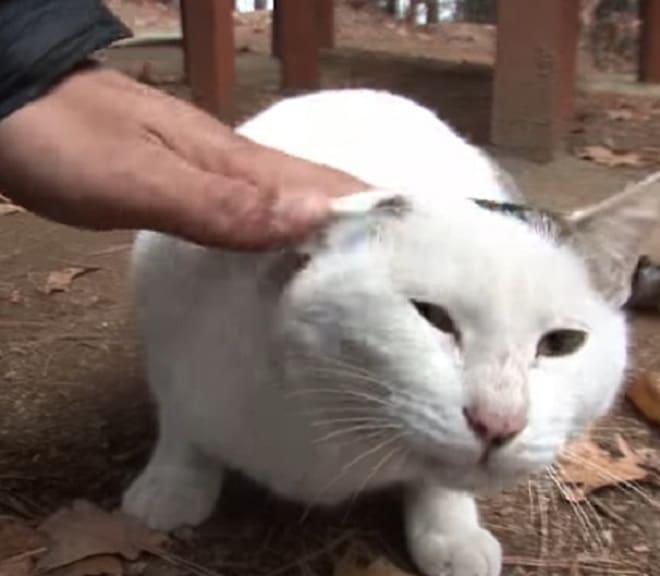 Кота гладят