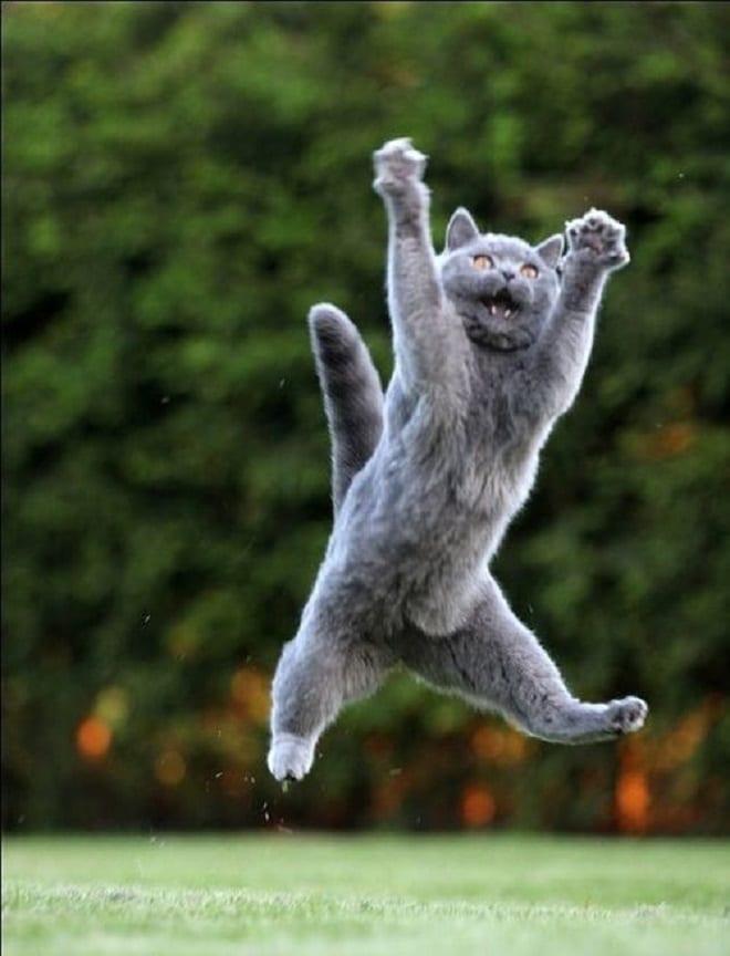 Радостный кот