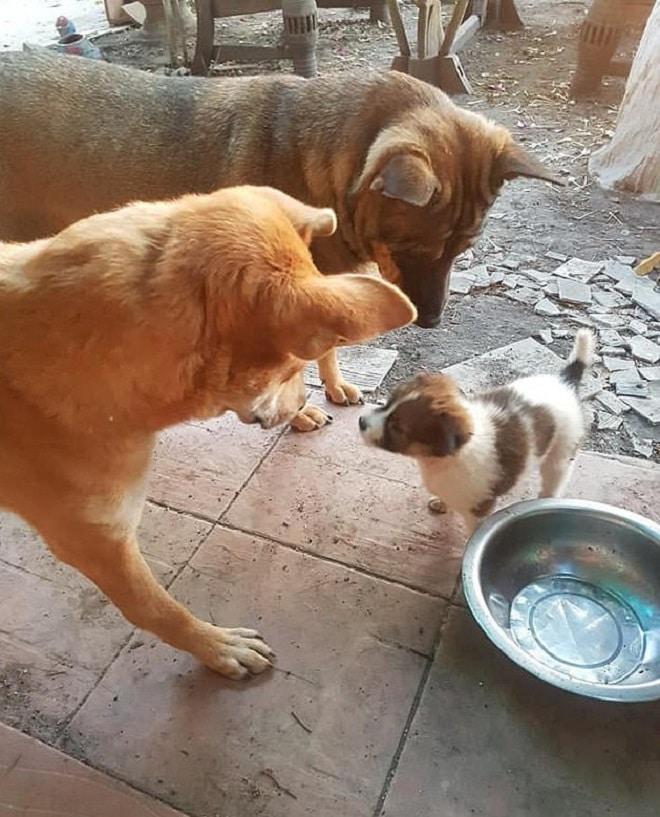 Две собаки и щенок