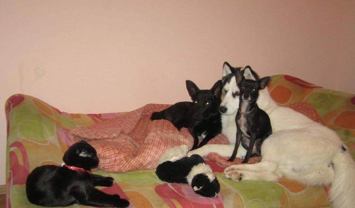 собаки и коты на кровати