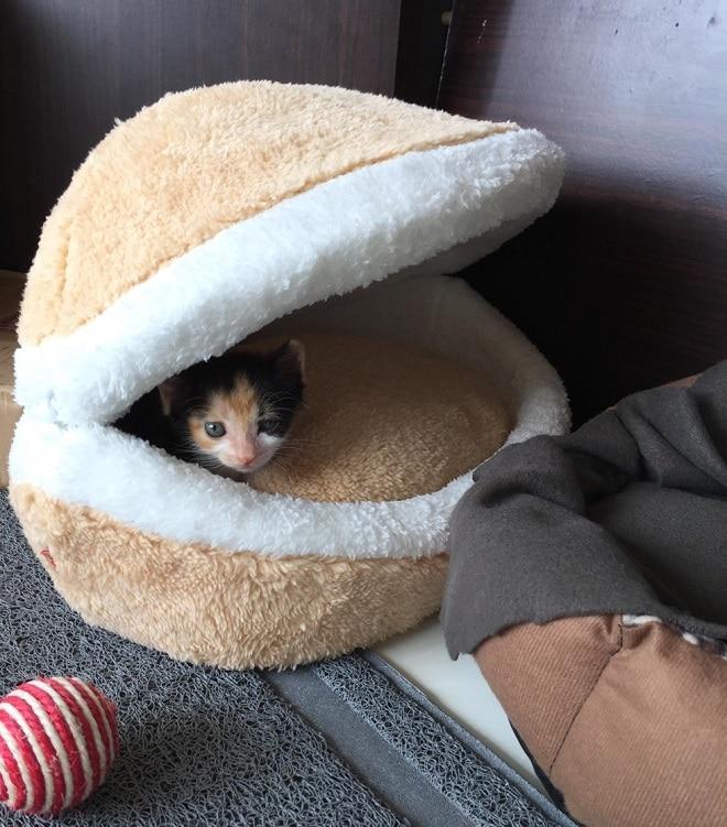 Котенок в домике