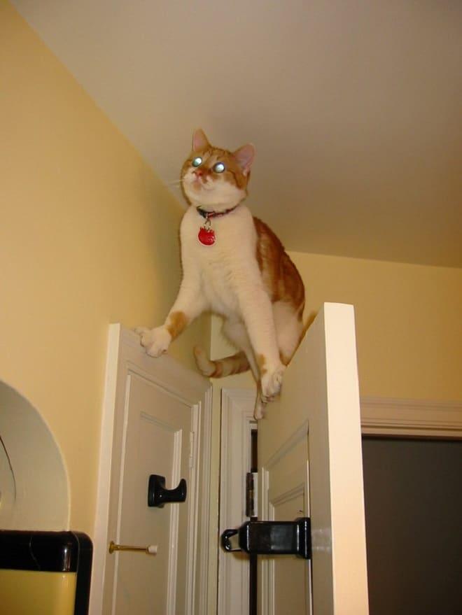 Кот на дверях