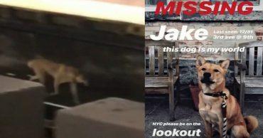 dog Jake