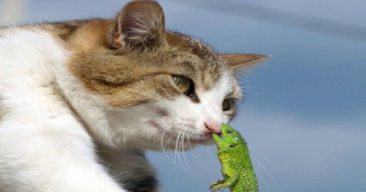 Кот и ящерица