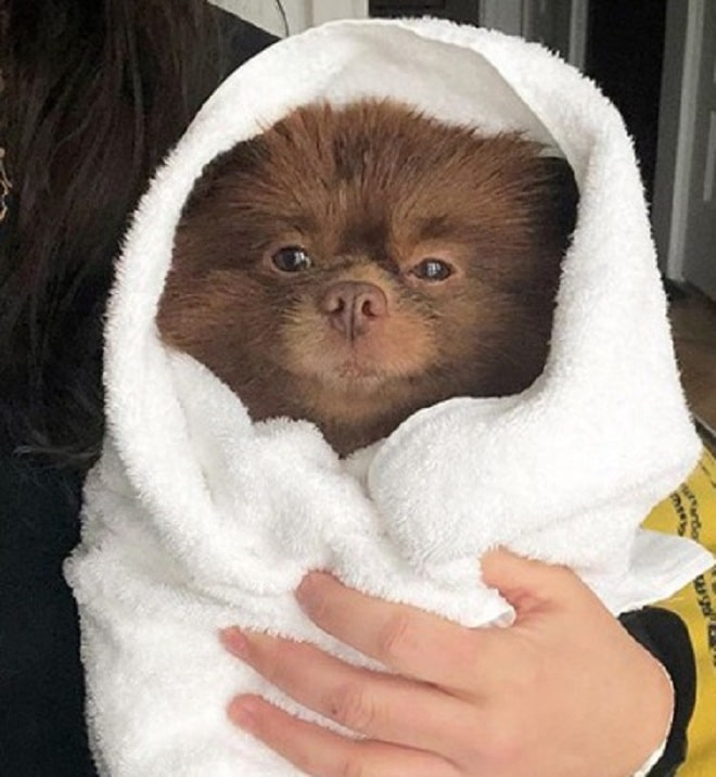 Песик в полотенце