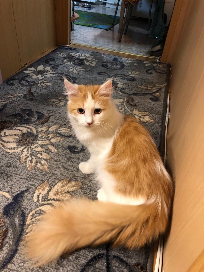 кошка с красивым хвостом