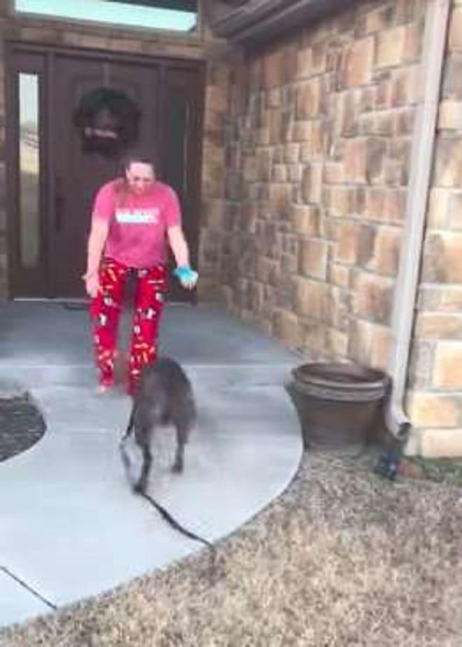 Собака бежит к девушке