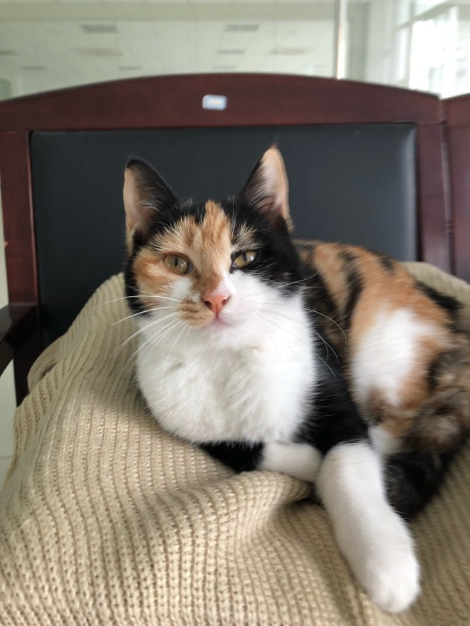 Кошка на стуле