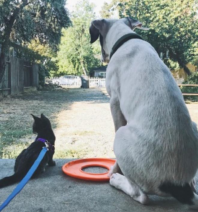 Котенок и пес на прогулке
