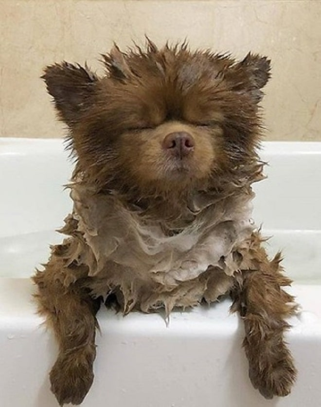 Собачка в ванной