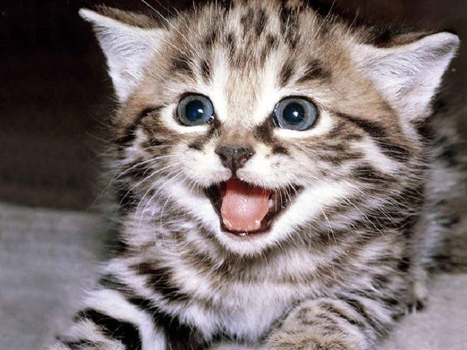 Полосатый котенок