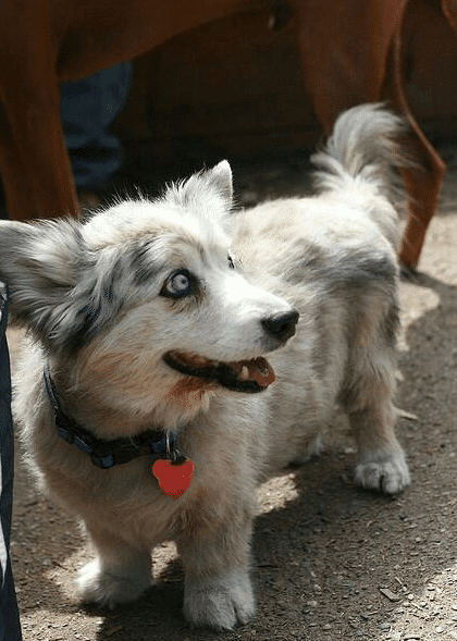 собака в ошейнике