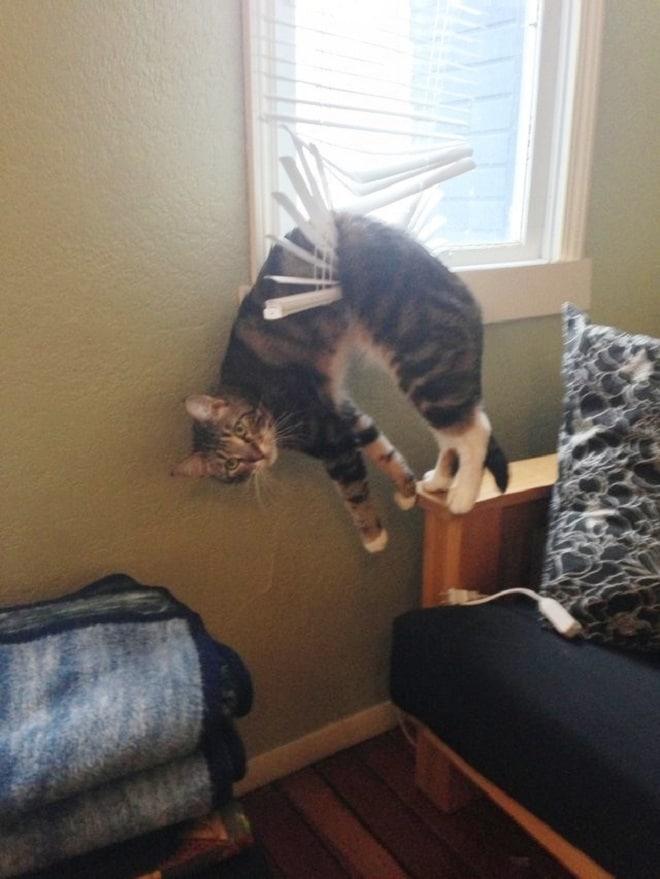 Кот в жалюзях