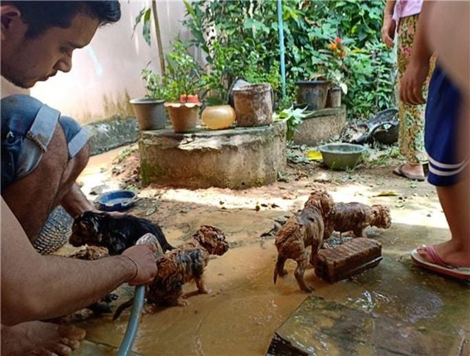 купание грязных щенков