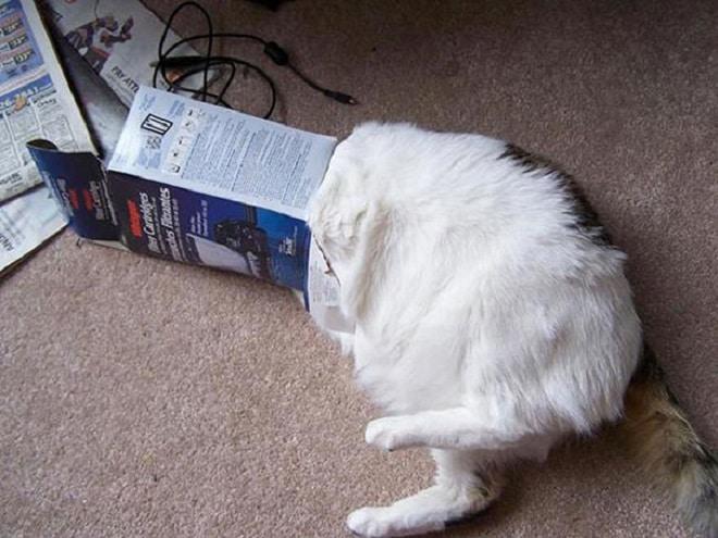 Кот застрял в коробке