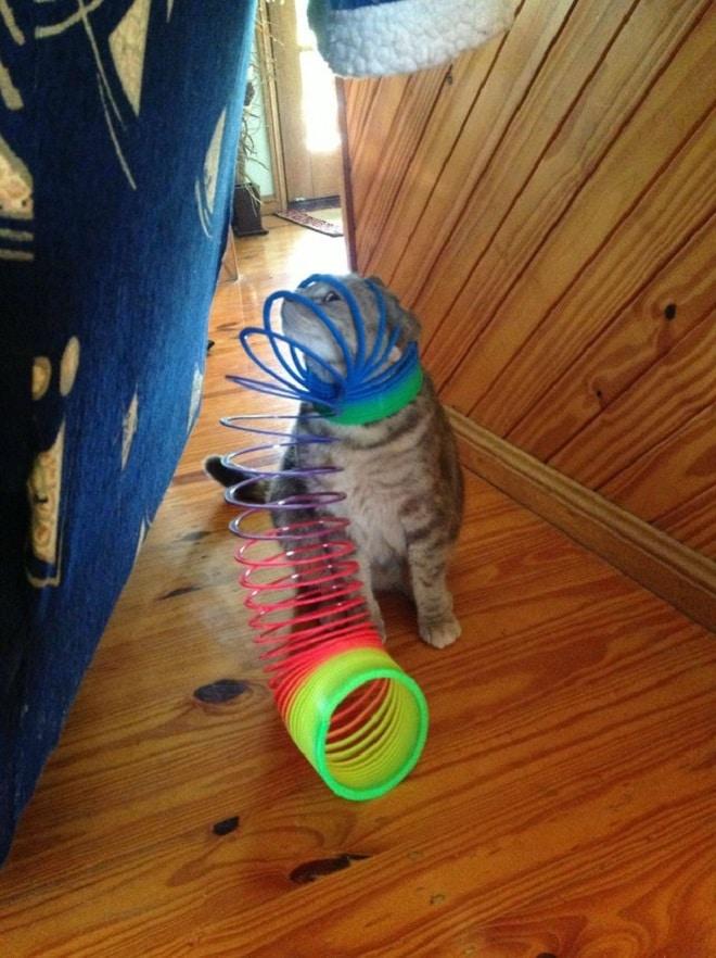 Кот застрял в радуге