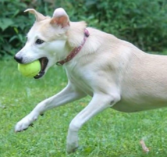 Собака ловит мяч