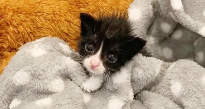 Котенок под пледом