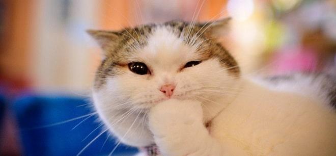 Кошка грызет лапу