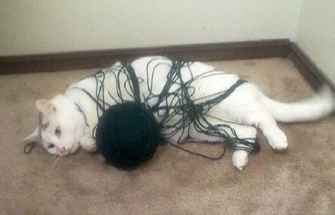 Кошка замоталась в нитках