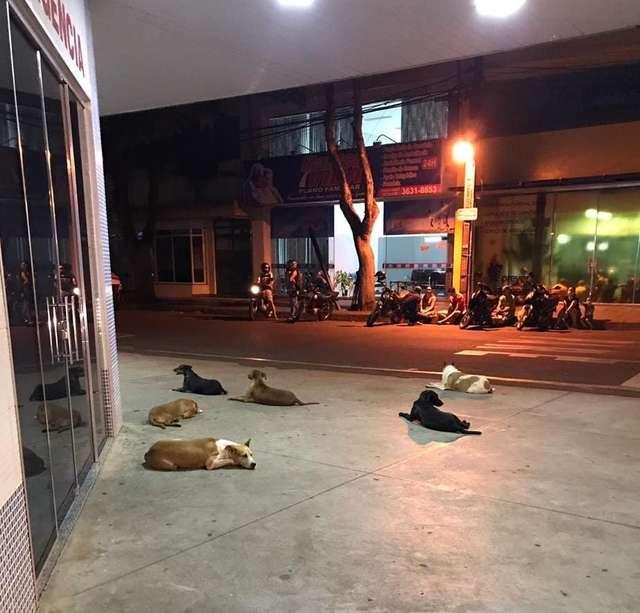 собаки у входа в больницу