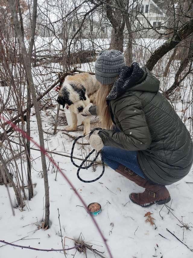 помощь собаке