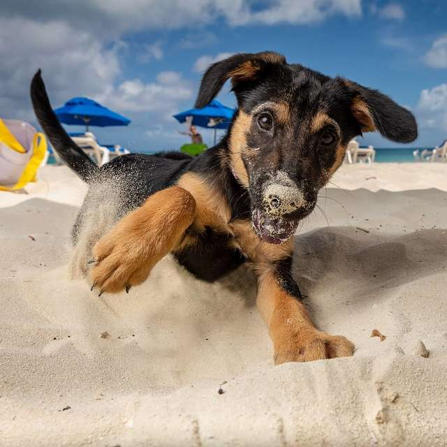 щенок на пляже