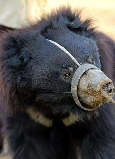 несчастный медведь