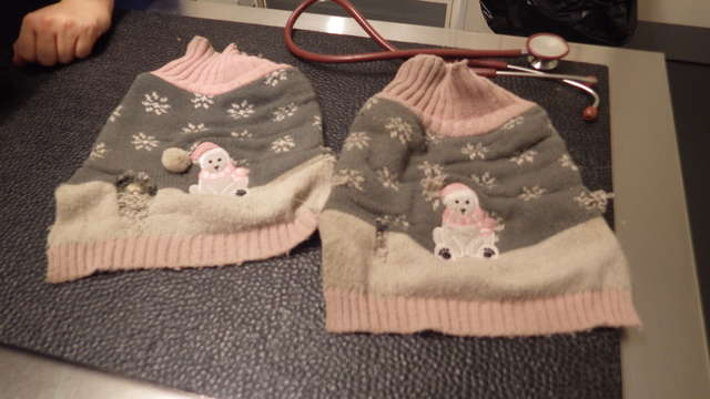 новогодний свитер для собаки