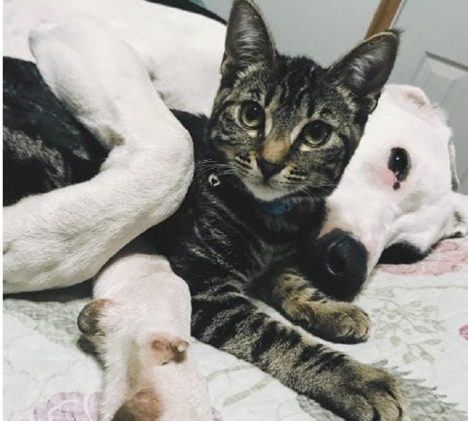 Собака обняла кота