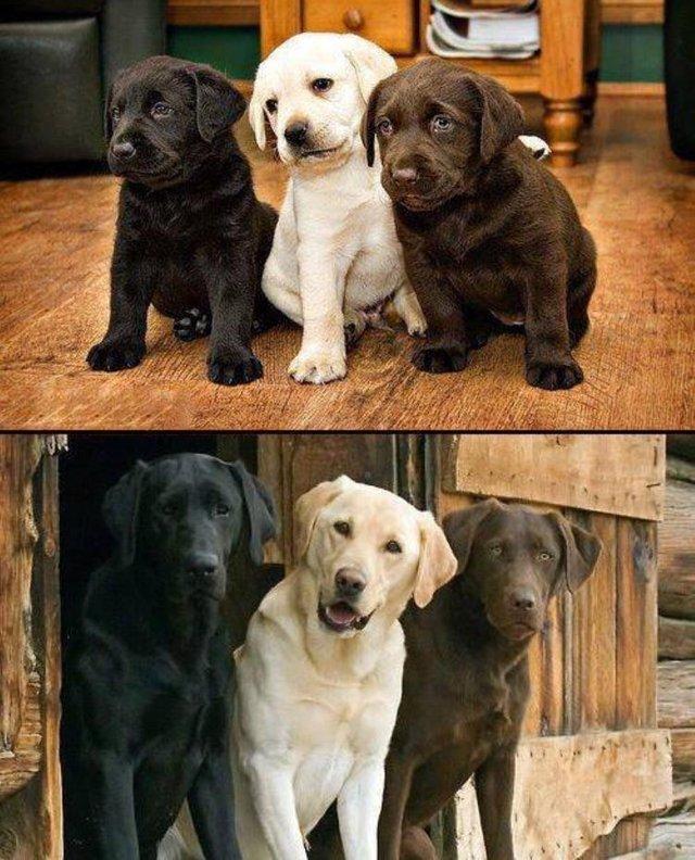 трое щенков выросли