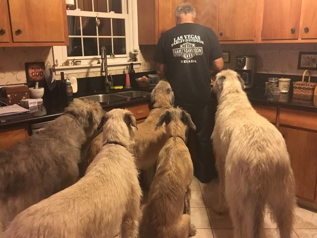 собаки на кухне