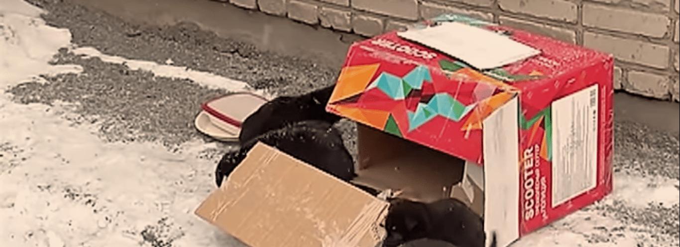 щенки возле коробки