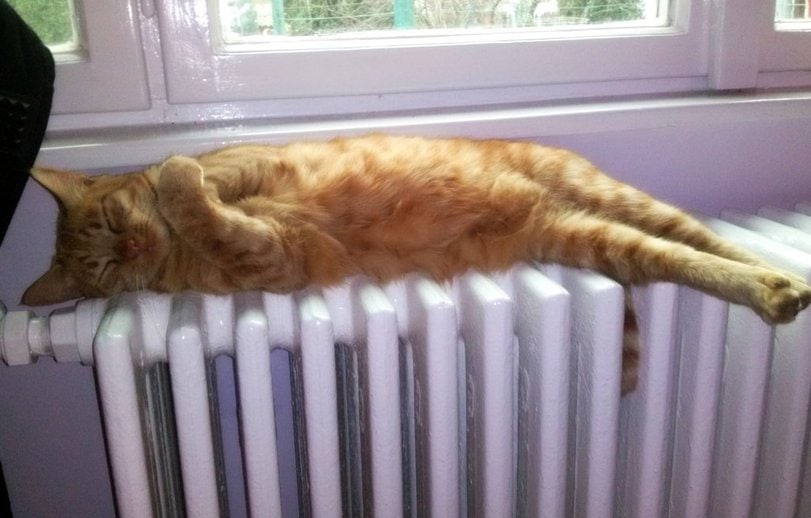спящий кот рис 3