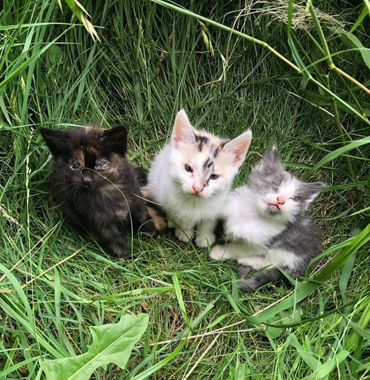 котята в траве