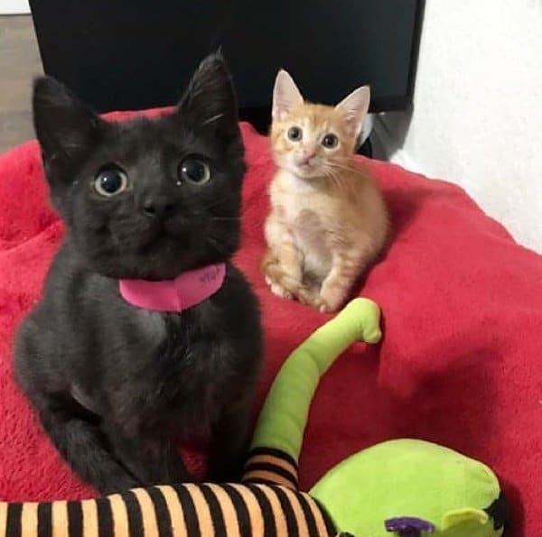 двое котят рис 2