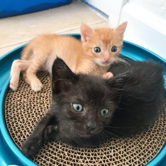 двое котят рис 3